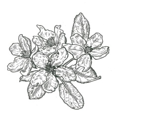 Pen and Ink logo, drawn in the spring from our apple blossoms.