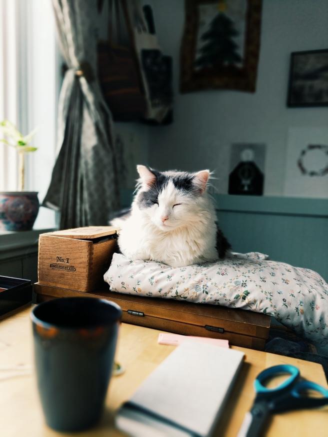 Studio Companion <3 Oh Pangur!