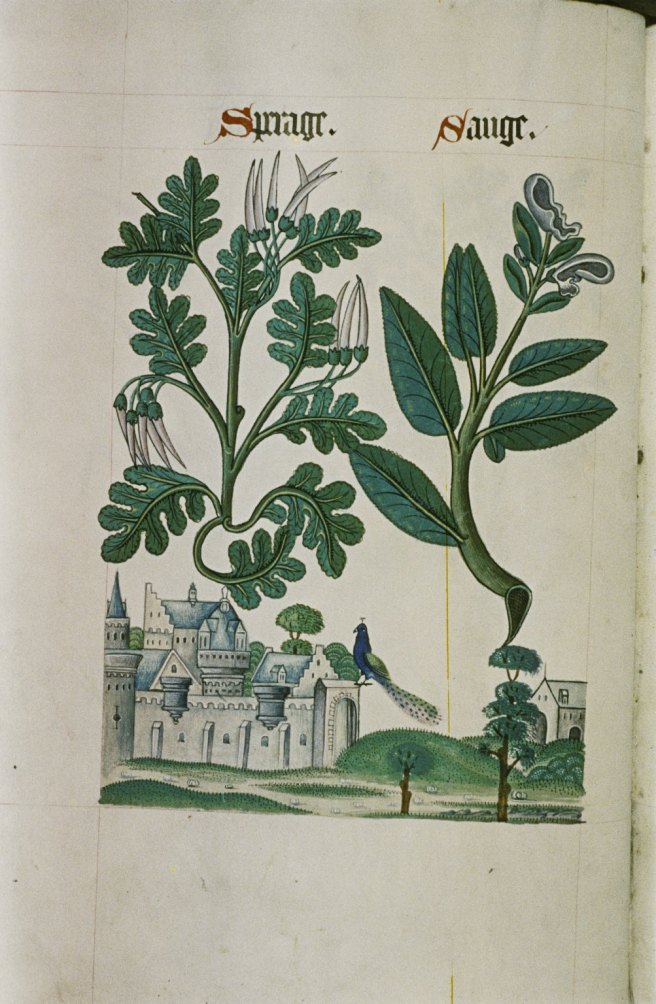 the_tudor_pattern_book_ms-_ashmole_1504_31