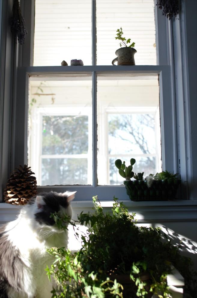 Pangur Ivy